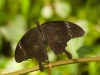 Motýli z Fata Morgany