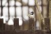 Ptáčci na naší zahrádce